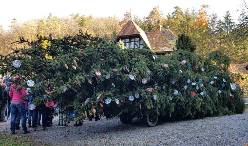 100 let od nalezení odložené Lidušky. Vánoční strom zítra vyrazí z Bílovic do Brna